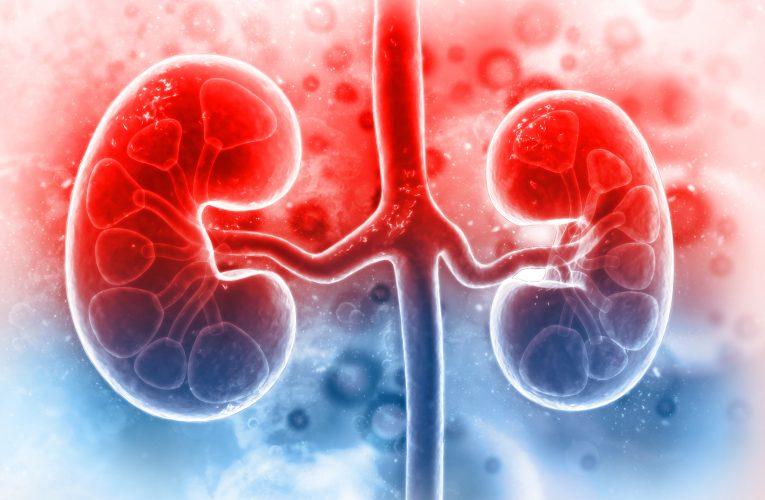 什麼是腎臟移植